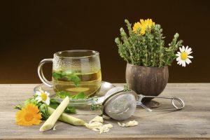 piante-medicinali